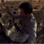 Sure hyenas can be friendly? Check it out on 360