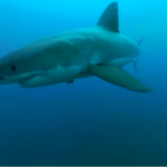Sharks become more tenebrous in 360 & 3D