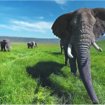 Elephants welcome you into their family in 360 & 3D
