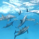 Dolphins welcome you to their family in this 360 experience