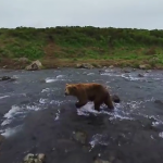 See the Bears of Kamchatka up close in an exclusive 360 video