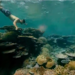 Great Barrier Reef VR: Introduces you to a unique place in the world in 360