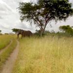 Safari guide tour goes 360