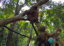 Orangutan School in 360 is a totally new way to learn