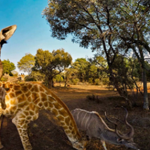 Most threaded animals 360° video