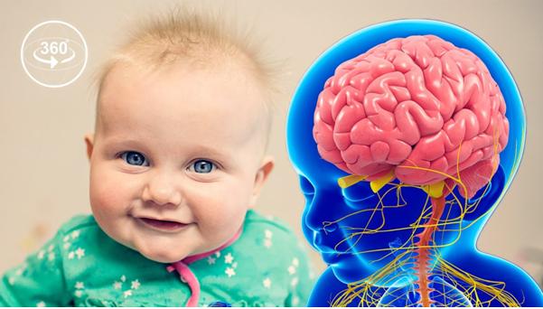Brain Development process through VR