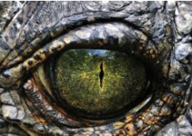 Jurassic World 2 360° experience