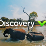 Playful Elephants Swim Discovery VR (360 video)