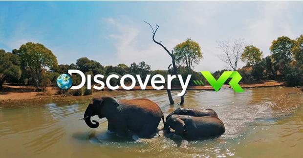 Playful Elephants Swim Discovery VR (360 video)
