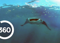 Swim with Mantas using VR